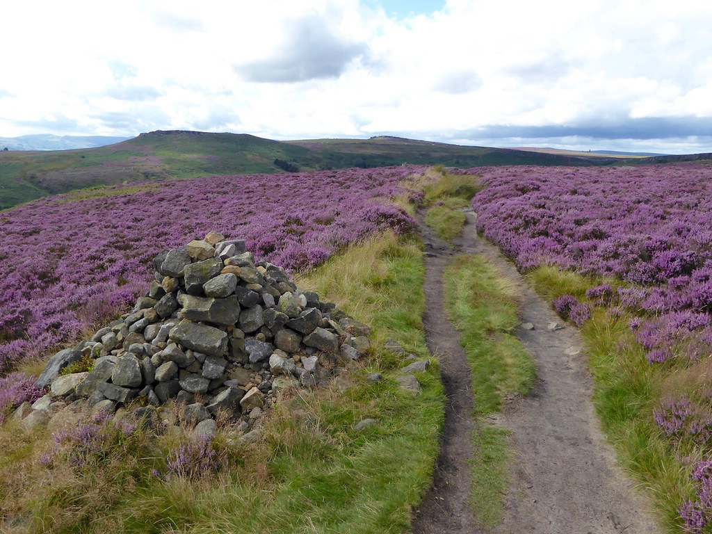Across the heather Sheffield to Bamford walk