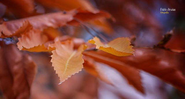 (531/17) Adelantando el otoño, Nikon D50, Tamron SP 70-300mm f/4-5.6 Di VC USD (A005)