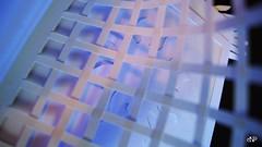 White Book_Nicoleta Faina_18