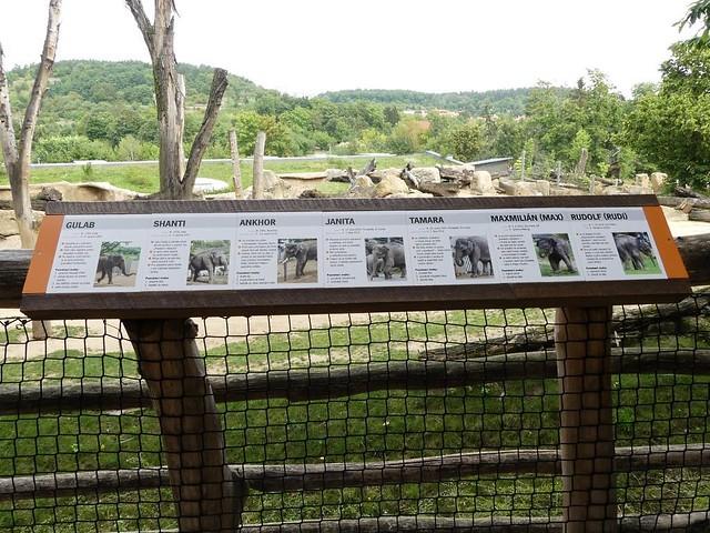 Elefanten, Zoo Prag