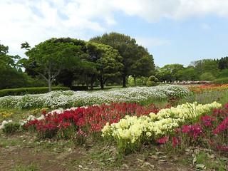 昭和の森 1 花々 03