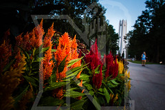campus evening light fall2017 tw 0323.jpg