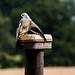 International Birds of Prey Centre (80)