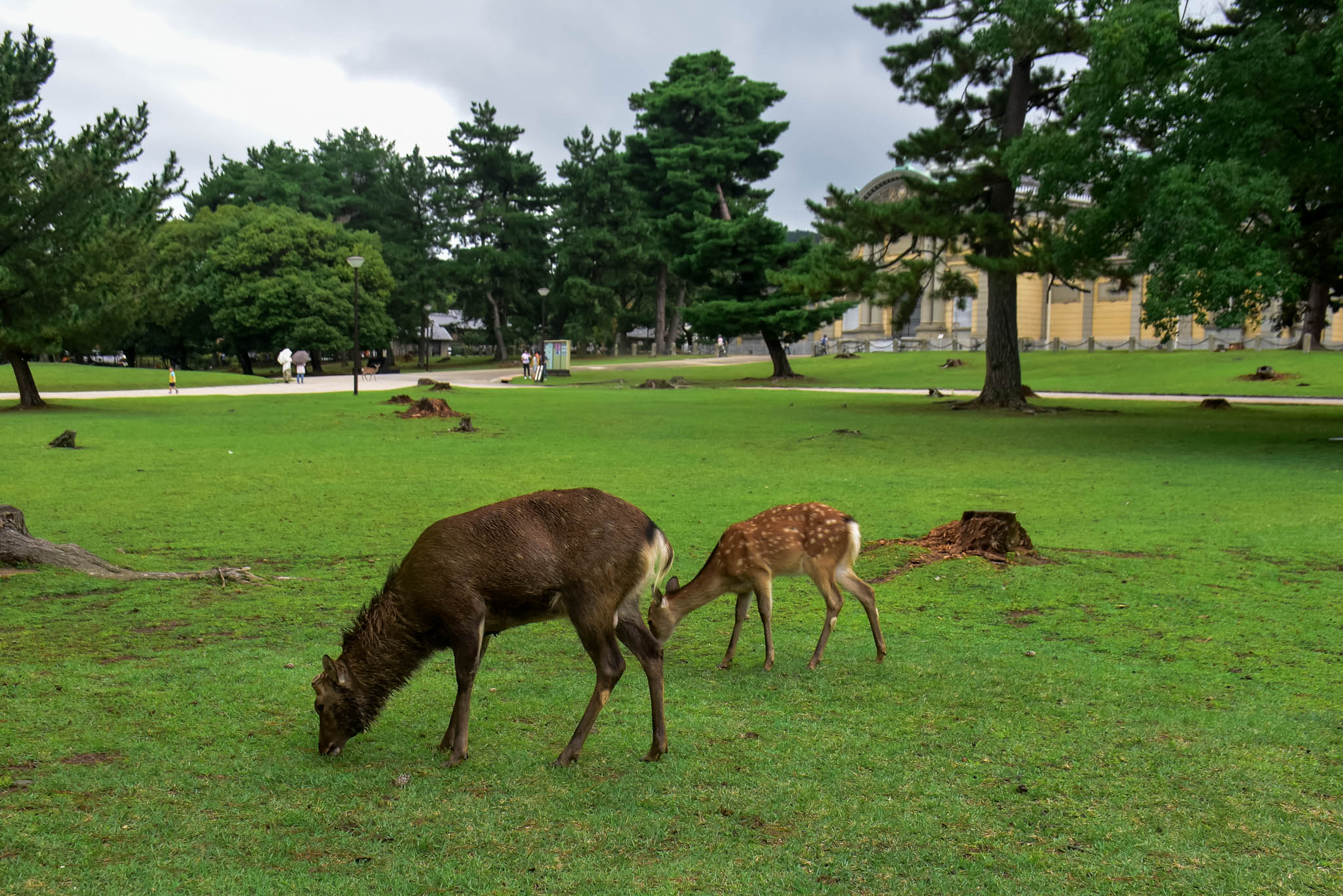 nara top attractions 3