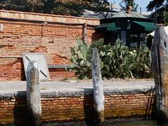 cacti outside