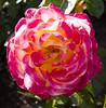 Botanic Gardens-032