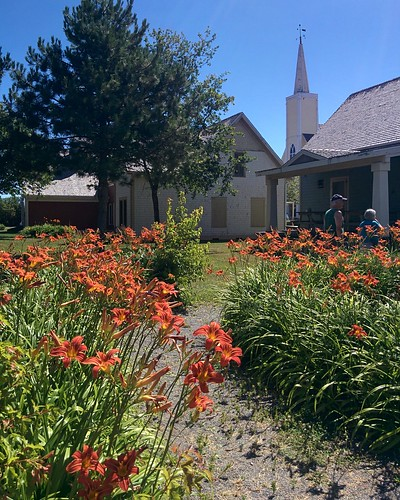 Gardens of Avonlea Village (5) #pei #princeedwardisland #cavendish #avonleavillage #garden #flowers #lilies #orange