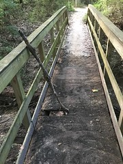 Scout Bridge on the Yellow Trail, Shelby Farms, before repair