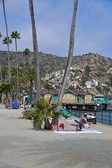 Catalina Friday