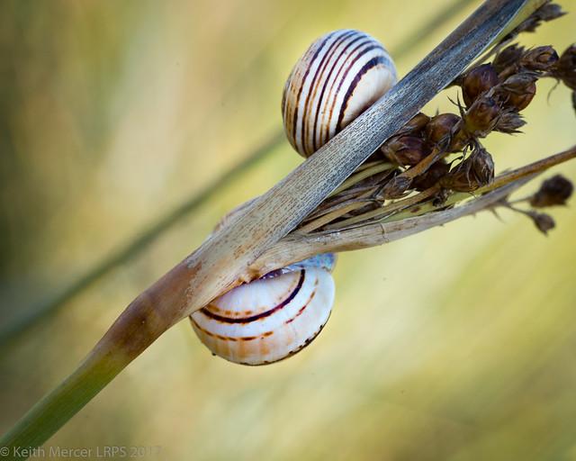 Tiny Snails