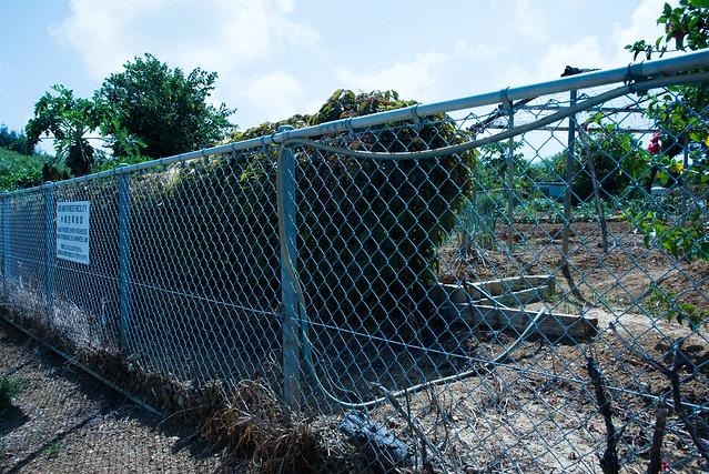 安保の丘。嘉手納 Kadena, Okinawa, 11 Aug 2017 -00364