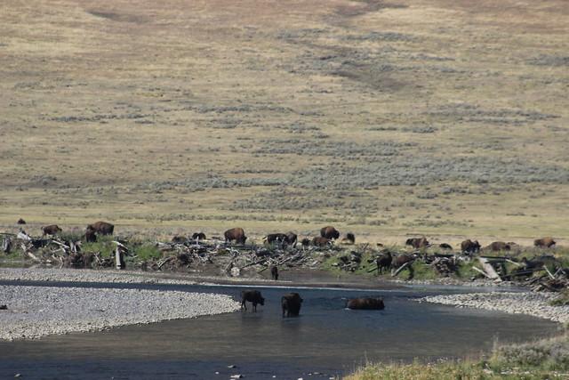 091217 Yellowstone (235)