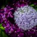 Flowers in closer look