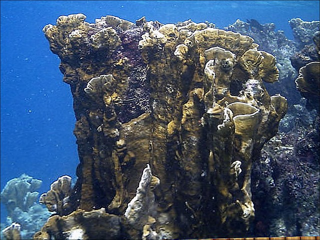 Bibi's Coral Reef Shop and Undersea World -Coral Relief