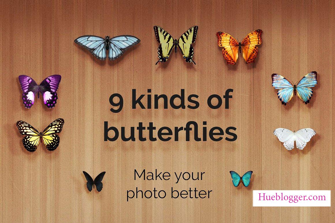 20+ PNG bươm bướm bay lượn tuyệt đẹp