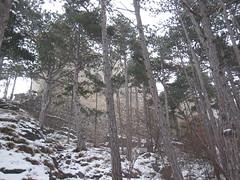 IMG_8540 Die Ruine Rauheneck kommt in Sicht, 24.1.2010