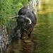 Highland Bull by crafty1tutu (Ann)