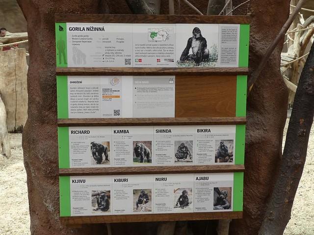 Gorillafamilie, Zoo Prag