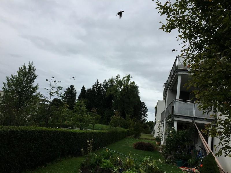 Cloud with bird