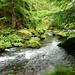 Řeka Kamenice mezi Hřenskem a Edmundovou soutěskou, foto: Petr Nejedlý