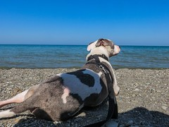 Juneau relaxing on the beach