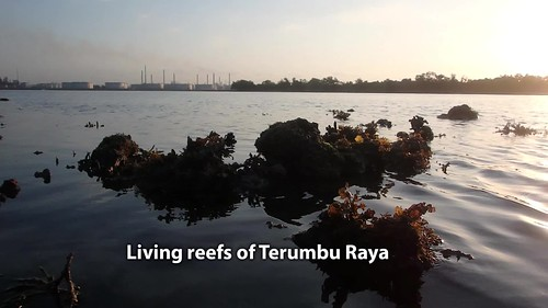 Living reefs of Terumbu Raya, Aug 2017