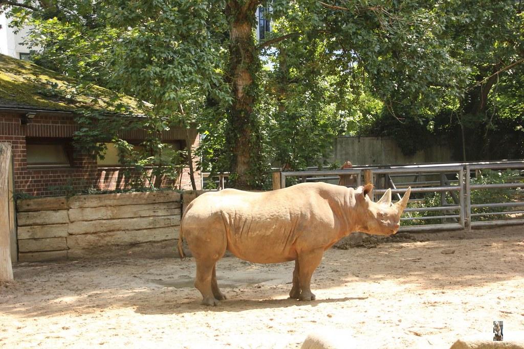 Besuch Zoo Berlin 20.07.20174