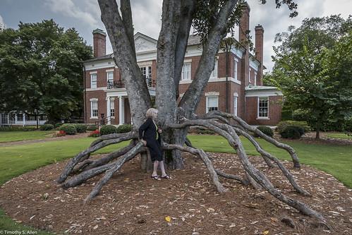 georgia janeingramallen magnoliatree nchs newnan historichouse house plants roots