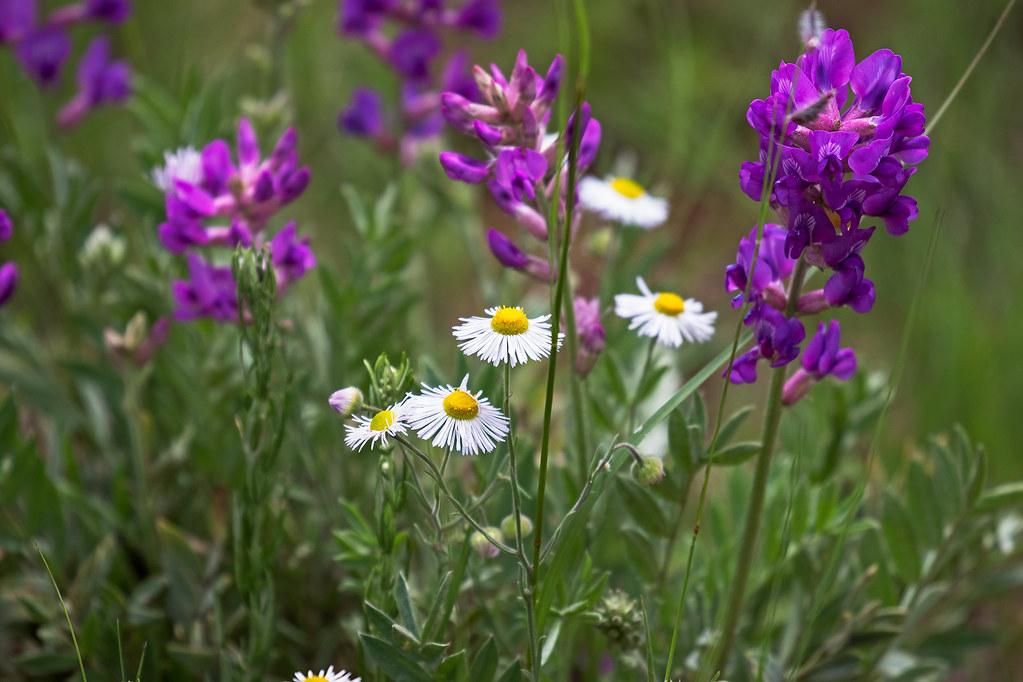 Wild-Flowers-14-7D2-081117
