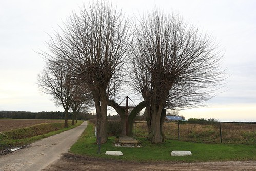 3 Hollandse lindes / 3 Lime trees, Posterholt (Netherlands)