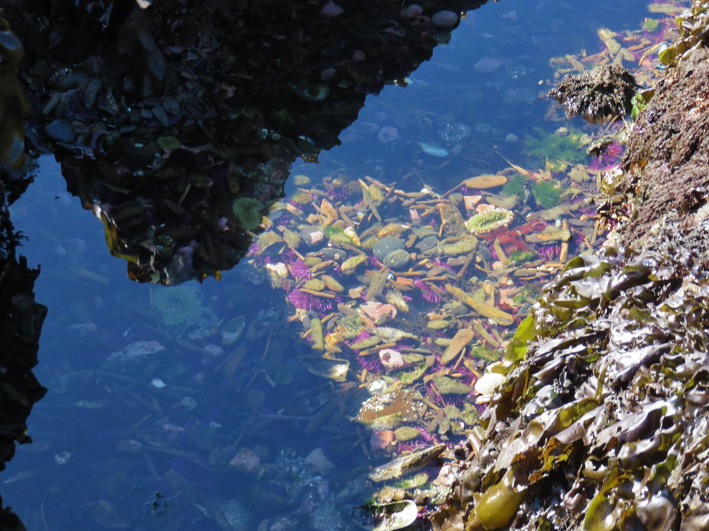 Tide pool at Cobble Beach - Yaquina Head Outstanding Natural Area