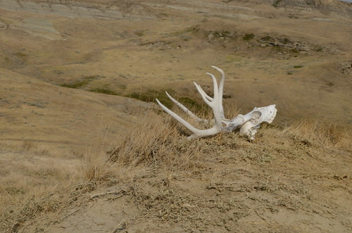 Grasslands East block skull on top