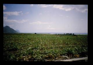 Suger Cane Field = サトウキビ畑