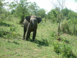 Udawalawa National Park, Sri Lanka
