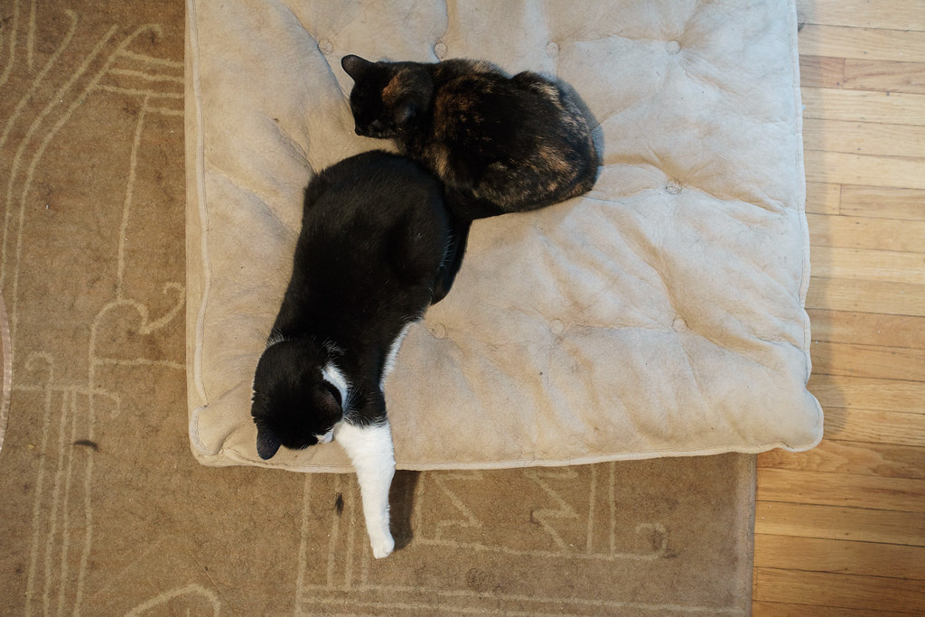 Our cat Trixie snuggles up behind Boo on a large dog bed