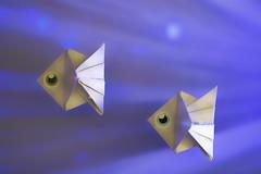 Pisces - HMM