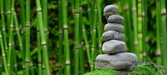 rocks_Bamboo