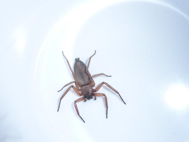 Spider in the Cup, Panasonic DMC-TZ40