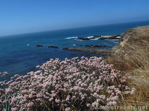 Wildflowers along the clifftop of Point Arena-Stornetta National Monument, California