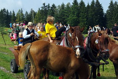 27.8.17 Hlinsko, Hamry and the Horses 086