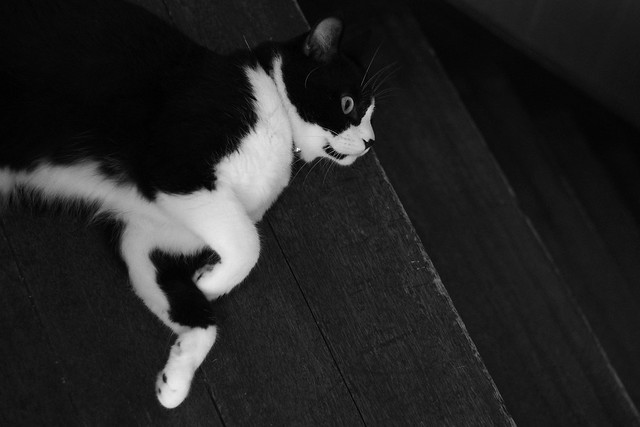 a cat on the stairs