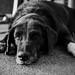 my_dog_04