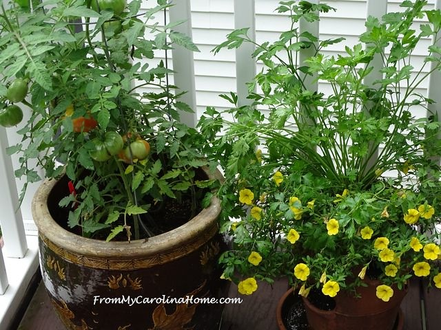 August in the Garden at From My Carolina Home