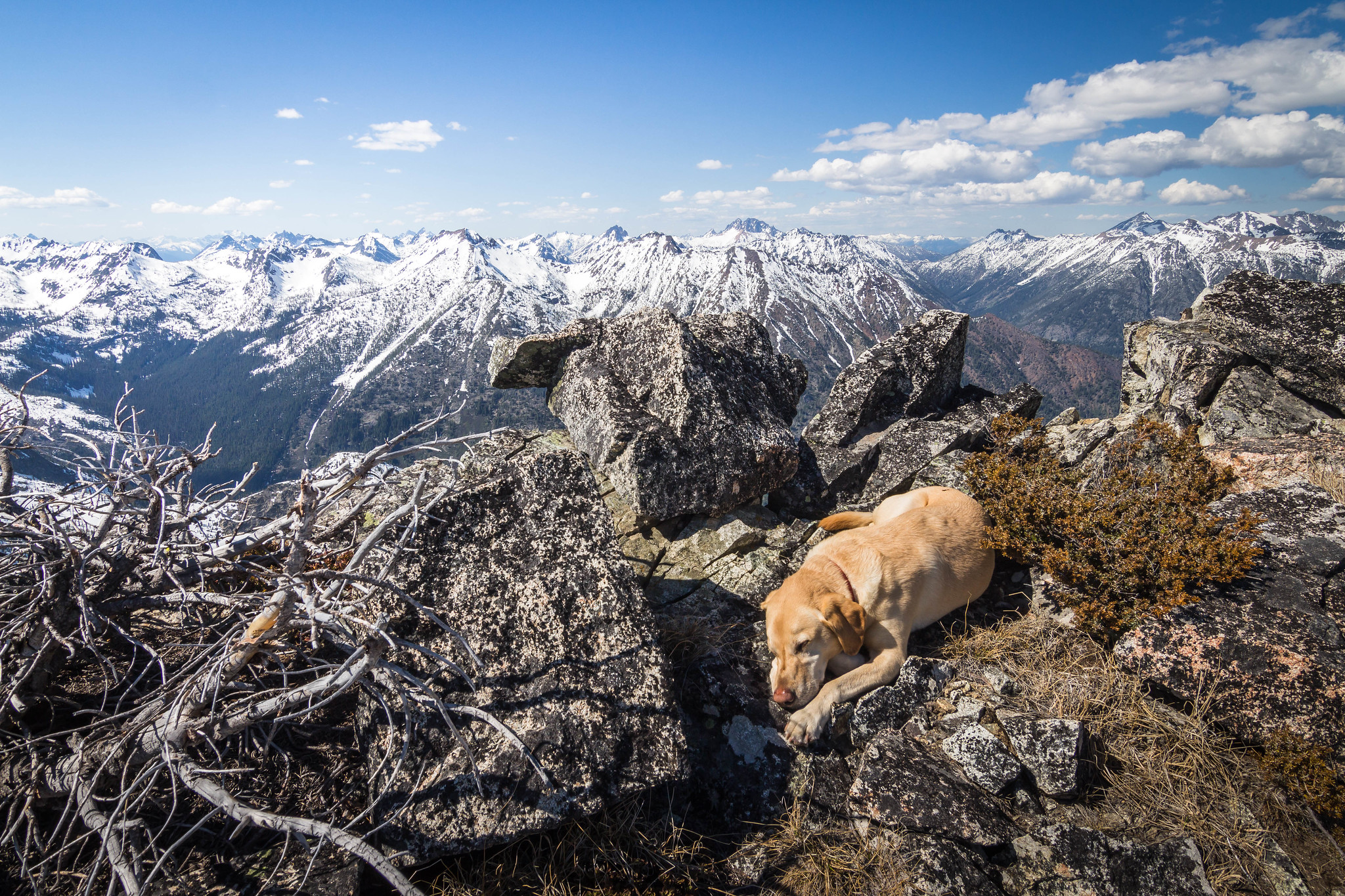 Summit dogs on Louis Peak