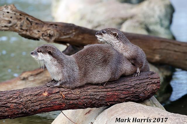 Otter11