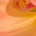 Tulip Wave (II), 4.4.17), 4.4.17