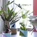 Erfrischender Wohnraum mit Pfeilblättern