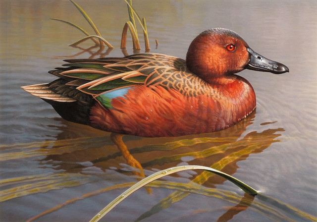 Greg Alexander's acrylic painting of a cinnamon teal is the second place winner of the 2017 Federal Duck Stamp Art Contest. Credit USFWS.