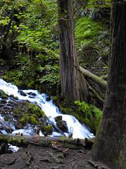 Multnomah-Falls-Columbia-Gorge-DSCN3324