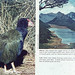 Small photo of Takahe - Notornis & habitat